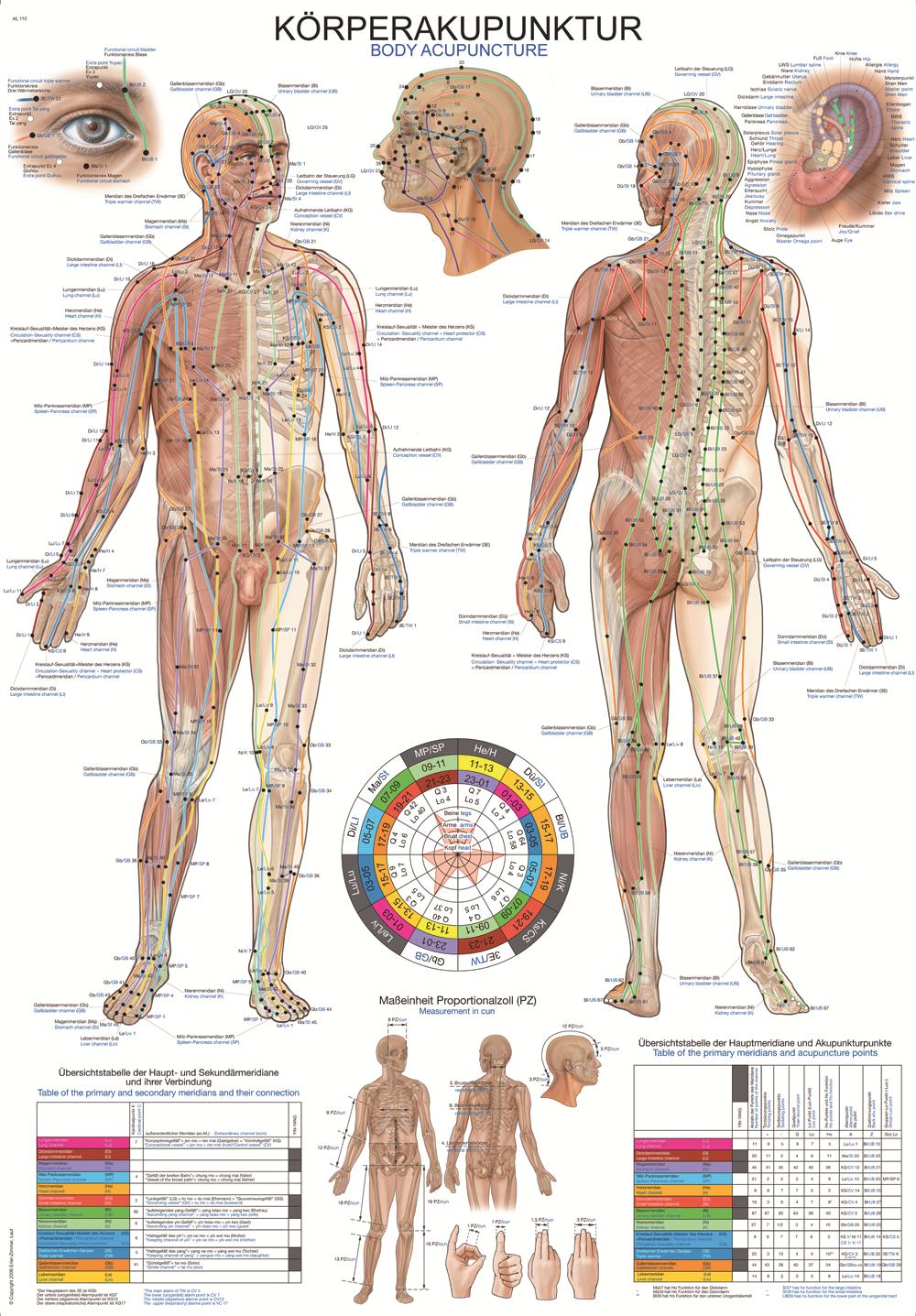 Gemütlich Bild Ihrer Anatomie Fotos - Menschliche Anatomie Bilder ...